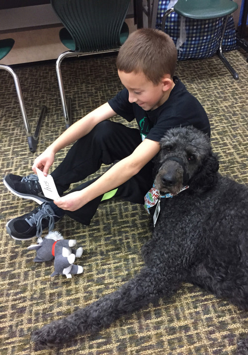 Young student reading word cards to a standard poodle.