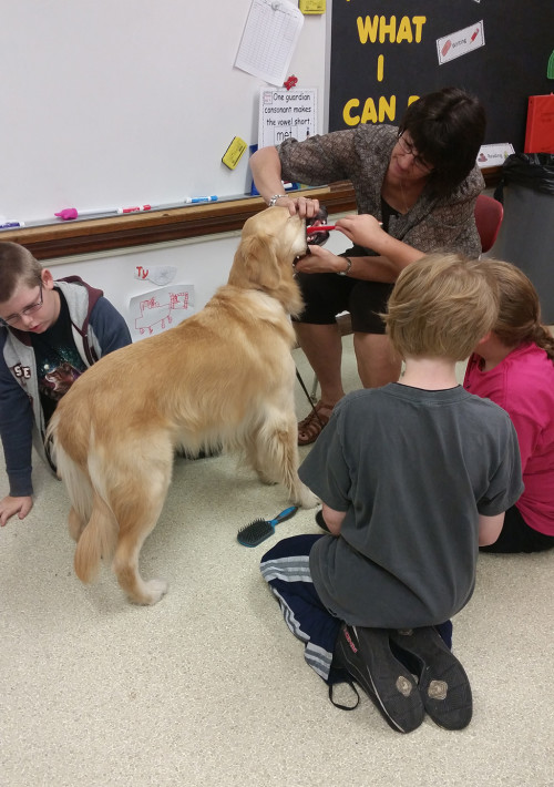 Kennedy the Golden Retriever having his teeth brushed by students and counselor