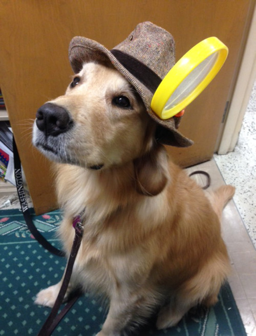 KENNEDY THE GOLDEN RETRIEVER WEARING A DETECTIVE'S HAT AND MAGNIFYING GLASS